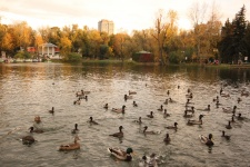 Центральном парке культуры и отдыха имени Горького (Gorky Central Park of Culture and Leisure)