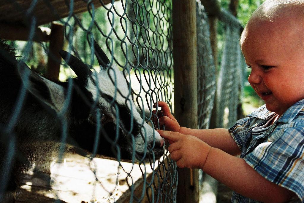 Отдел домашних животных. Автор: mskogly. Фото:  www.flickr.com