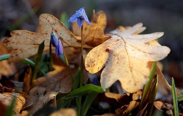 Волгоградский фотограф поймал в объектив весну