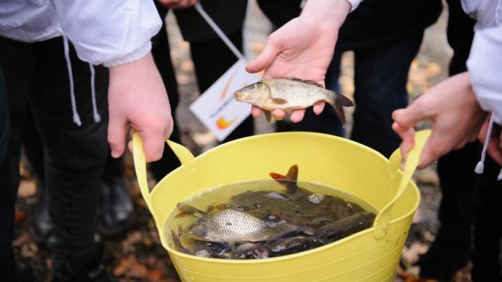 В помощь природе: КНПЗ выпустил в Волгу более 80 тысяч мальков ценных видов рыб