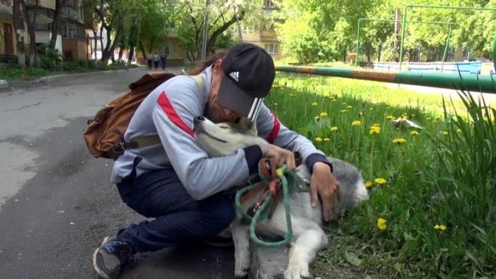 Хаски Кент вернулся к хозяину: в Тюмени нашли мошенника, укравшего собаку у инвалида