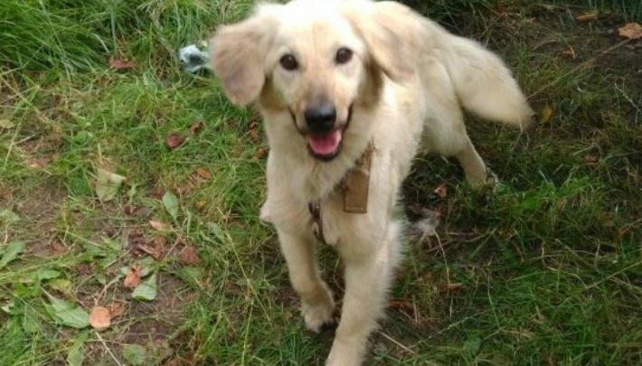 Второй шанс: в Ростове ищут хозяев для трех собак из «концлагеря» в Мокром Батае