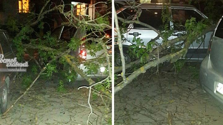 В Ростове на СЖМ рухнувшее дерево придавило три автомобиля