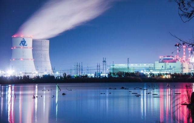 На водоеме-охладителе Ростовской АЭС поселилась стая лебедей