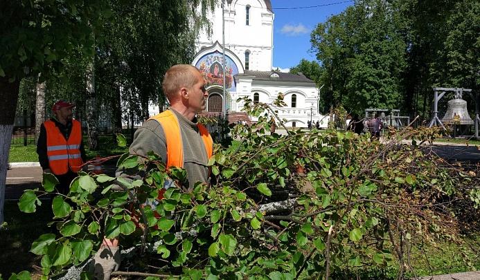 В Ярославле спилили 500 деревьев: зачем