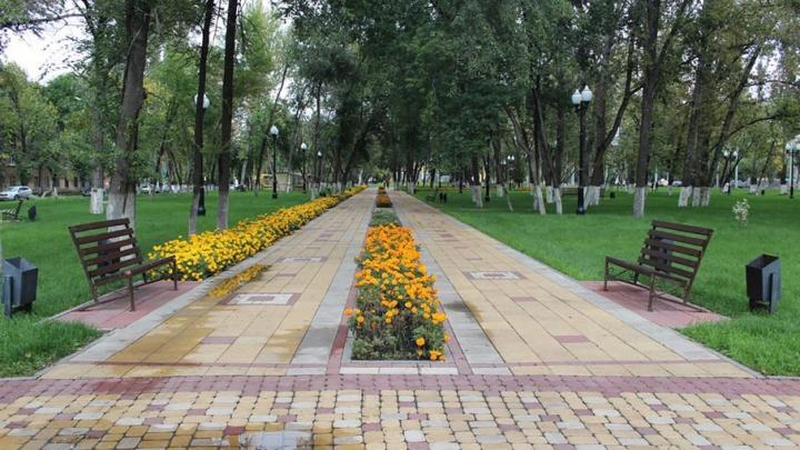 Осенью в скверах на Московском шоссе и Ново-Садовой высадят 100 деревьев