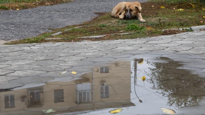 Осенний маскарад: волгоградцам показали настроение города