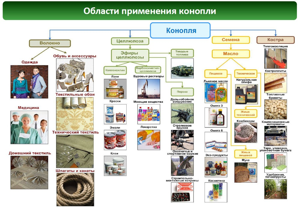 Иллюстрация предоставлена Агропромышленной ассоциацией коноплеводов России