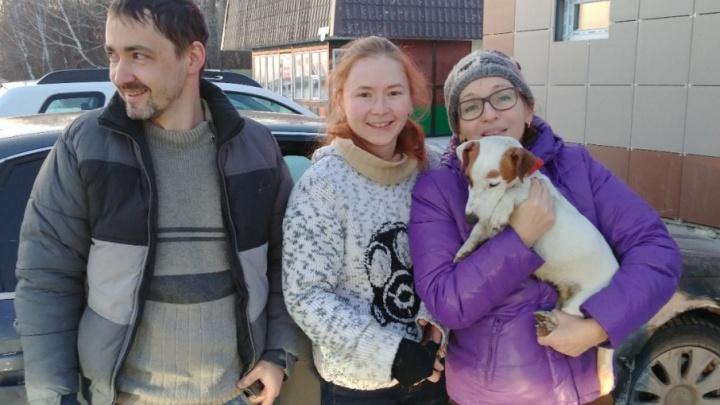 Собаку, сбежавшую из машины после аварии на трассе Екатеринбург — Тюмень, нашли и вернули хозяевам