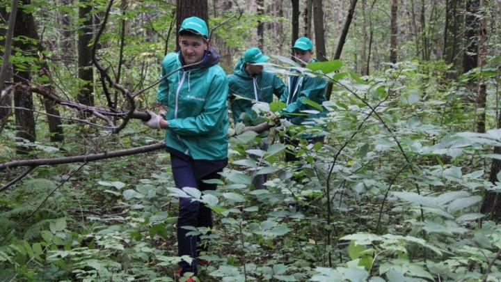 Школьники, студенты и работники «УРАЛХИМа» расчистили седьмой квартал Черняевского леса