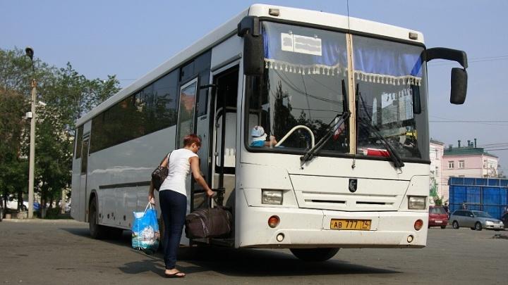 Вперёд, к лошадкам: доехать до «Рифея» теперь можно на городских автобусах