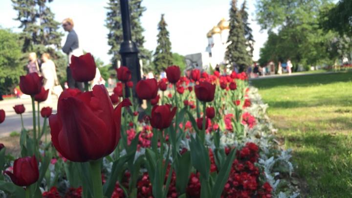 Синоптики рассказали, когда в Ярославле потеплеет
