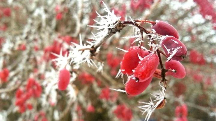 В Волгоградскую область пришли заморозки