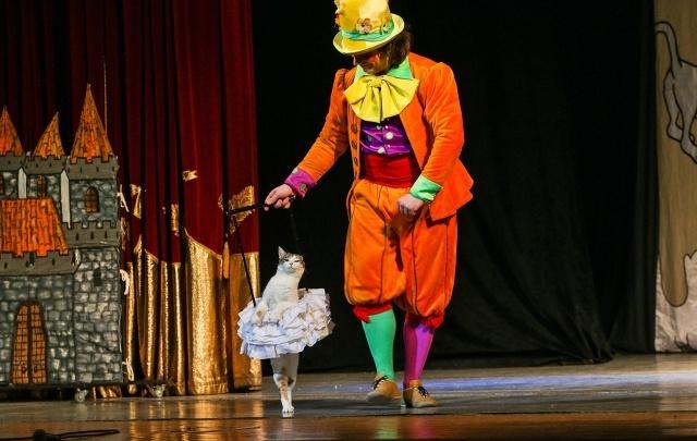 Кошки, Моцарт и валерьянка: в Челябинске прошел спектакль «Страна Кошландия» с Владимиром Куклачёвым