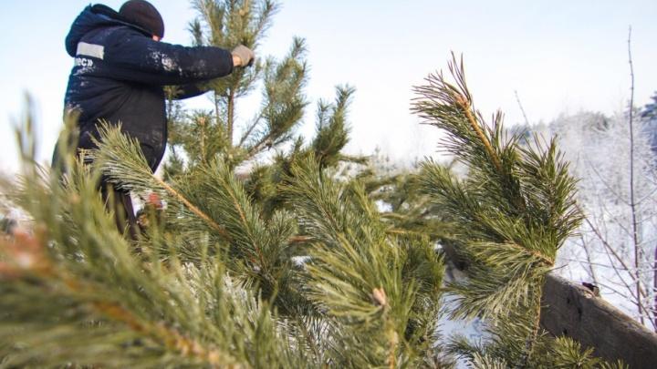 В Самаре заключают трудовые договоры с предпринимателями на продажу хвойных деревьев