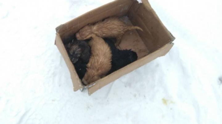 В Ярославской области хозяева выкинули умирать на мороз целый мешок щенков