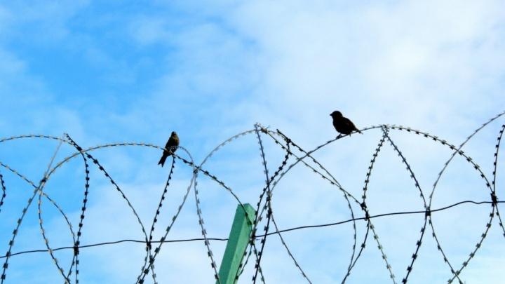 В Плесецком районе двое маленьких детей спасли сотрудника колонии от тюрьмы