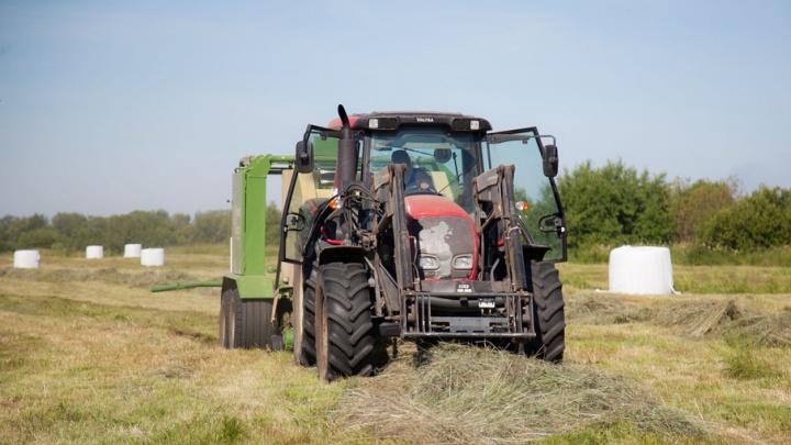 В Красноборском районе введен режим ЧС из-за срыва плана по заготовке кормов