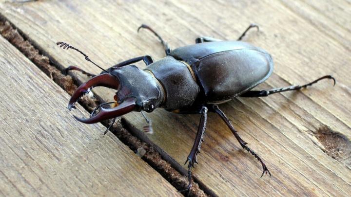 В Волгоградской области с воздуха вытравят насекомых
