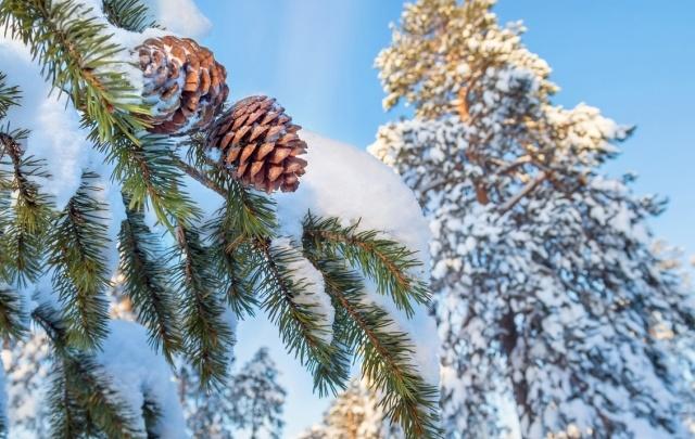 Ростовчан приглашают в гости к Деду Морозу в Великий Устюг
