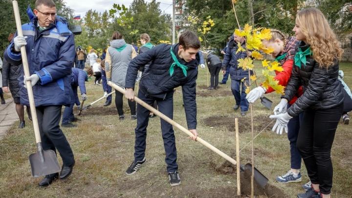 Воздух в Магнитке станет чище: в городе высадили 1000 молодых деревьев