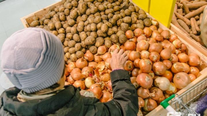Станет больше самарских продуктов: в регионе создадут агропромышленный парк