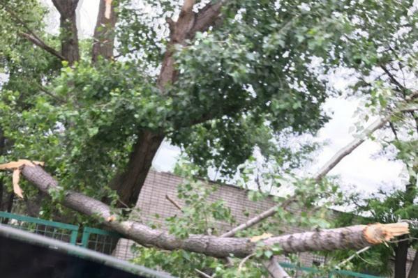 Волгоградцам не стоит парковать машины под деревьями