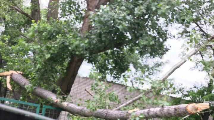 В Волгограде падают деревья, а МЧС предупреждает о ветре и грозах