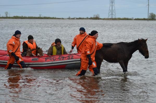 Спасатели переправляют лошадей