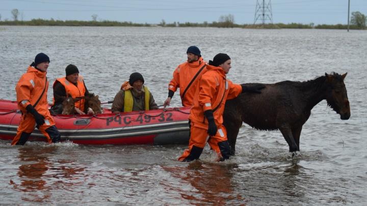 Спасатели помогли пенсионеру и животным покинуть зону подтопления под Ишимом