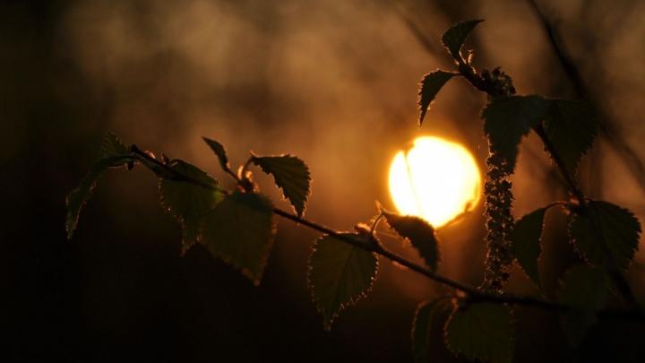Плохие новости для дачников: лето в Поморье начнется с ночных заморозков