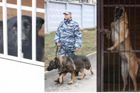 Служебные собаки — незаменимые напарники