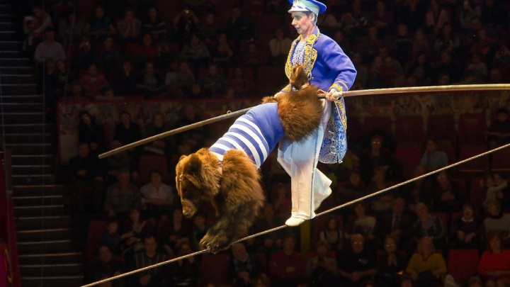 «Море» зовет в цирк: медведи на высоте и билеты вдвое дешевле