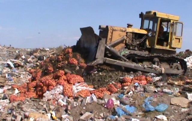 Под Ростовом бульдозер раздавил почти 20 тонн репчатого лука