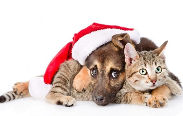 Пес в кепке и кот в сапогах
