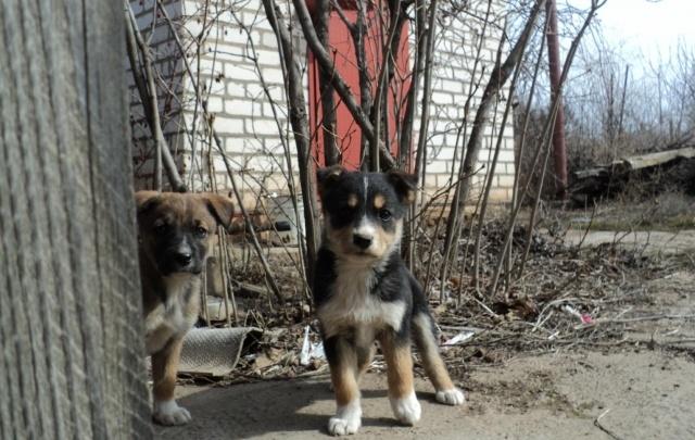 В Волжском сносят приют для бездомных собак