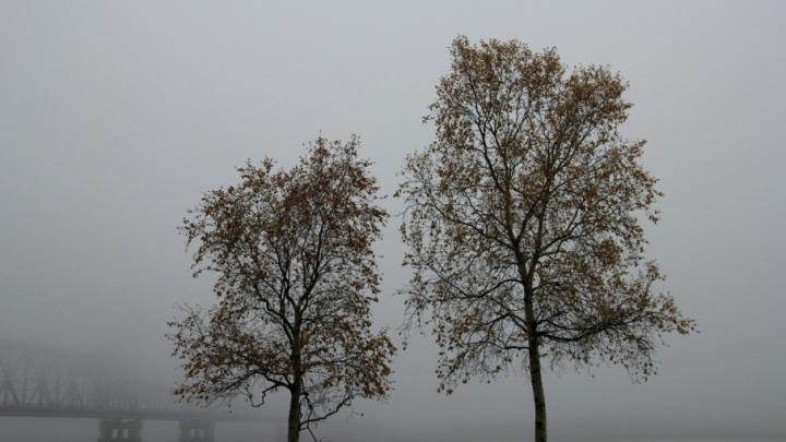 Рабочая неделя закончится в Поморье дождями и порывистым ветром