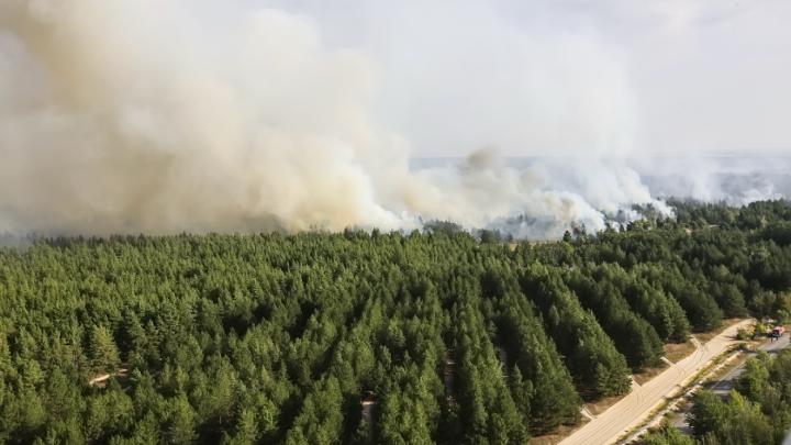 На месте лесного пожара под Усть-Донецком высадят 20 тысяч хвойных деревьев