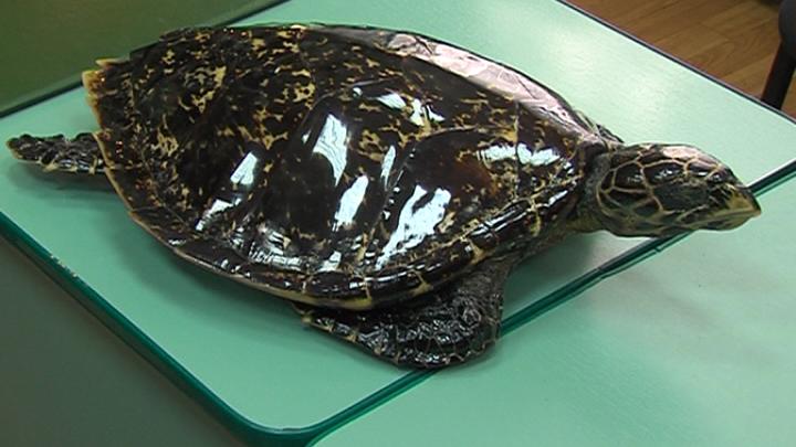 Кожа крокодила в подарок и контрабандный тестостерон: топ находок в багажах ярославцев