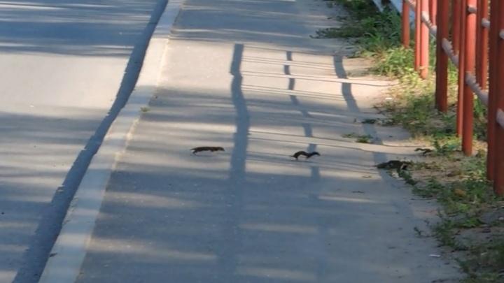 Ярославцы столкнулись на улице с неведомыми зверьками