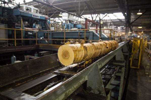 Ранее «Поморский лесной технопарк» исключили из списка приоритетных инвестиционных проектов