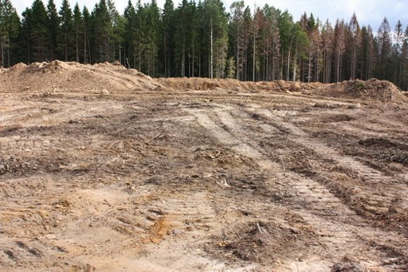 Вот так сегодня выглядит курган. Фото Ивана Стасюка, karpovka.net