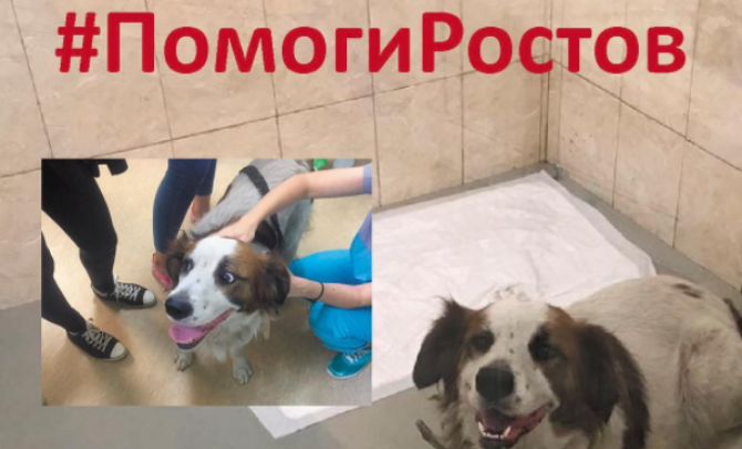 Ростовский Хатико: пес Якут всю ночь прождал своих хозяев на пепелище сгоревшего дома