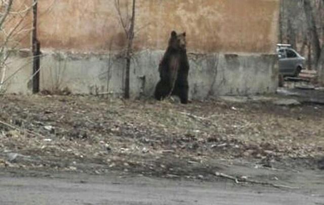Гуляющего в центре Челябинска медведя сняли на видео