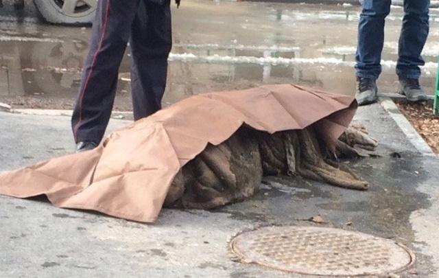 В Тюмени установили подозреваемого в убийстве мужчины, чье тело нашли в канализационном колодце