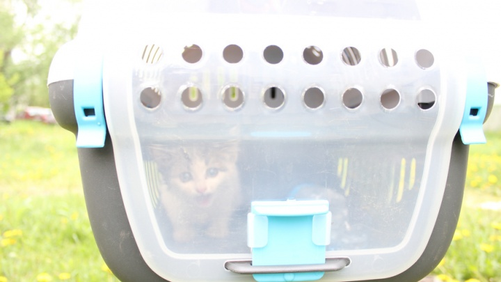 В Челябинске демонтировали фонарный столб, чтобы спасти котёнка