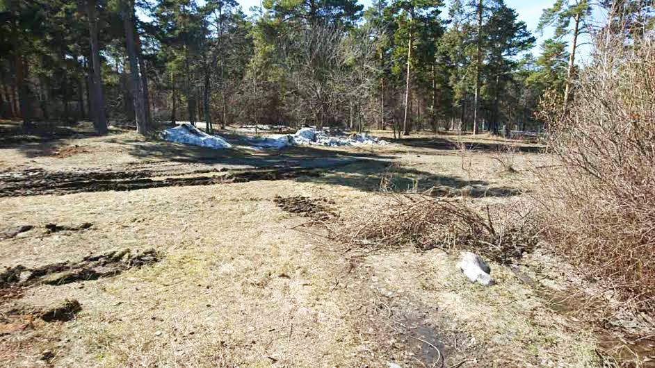 Челябинцев обеспокоило исчезновение деревьев в парке Гагарина