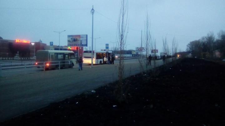 «Только не пухонесущие»:  напротив  ТЦ «Московский» высадили несколько десятков тополей