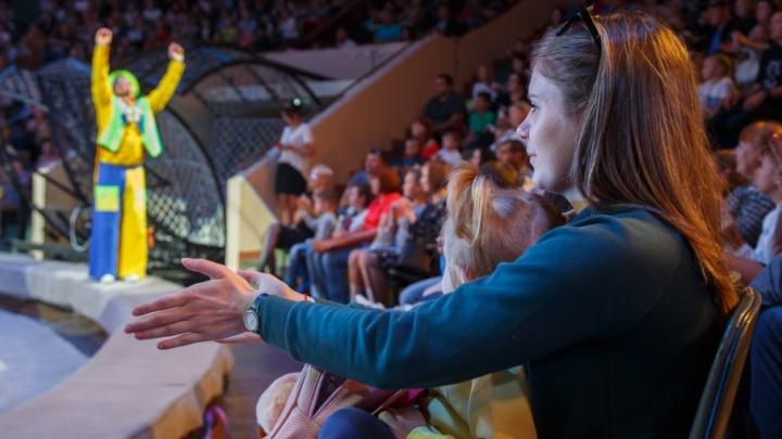 Волгоградский цирк из-за огромного долга за свет не сможет кормить животных