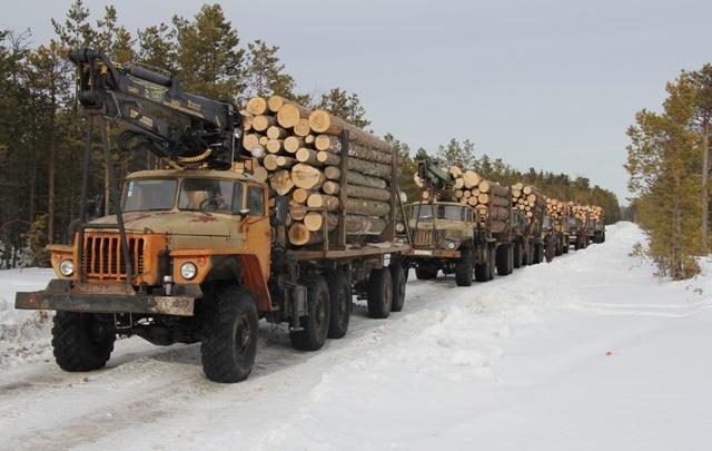 Преступники, вырубавшие лес в Тюменской области, получили условные сроки